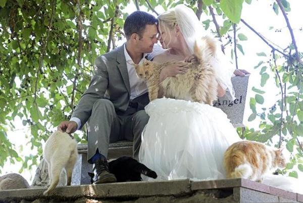 Matrimonio, coppia sceglie testimoni: sono....1100 gatti