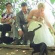 Matrimonio, coppia sceglie testimoni: sono....1100 gatti 2