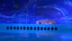 Guarda la versione ingrandita di YOUTUBE Orso più triste mondo vive nel centro commerciale