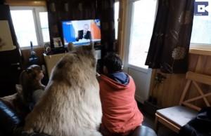 Guarda la versione ingrandita di Orso da 136 chili vive in casa in Russia