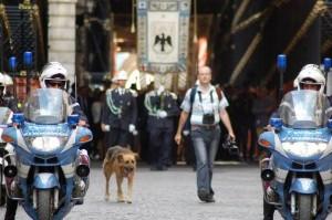 Guarda la versione ingrandita di Terremoto L'Aquila, morto Pluto: addio al cane simbolo