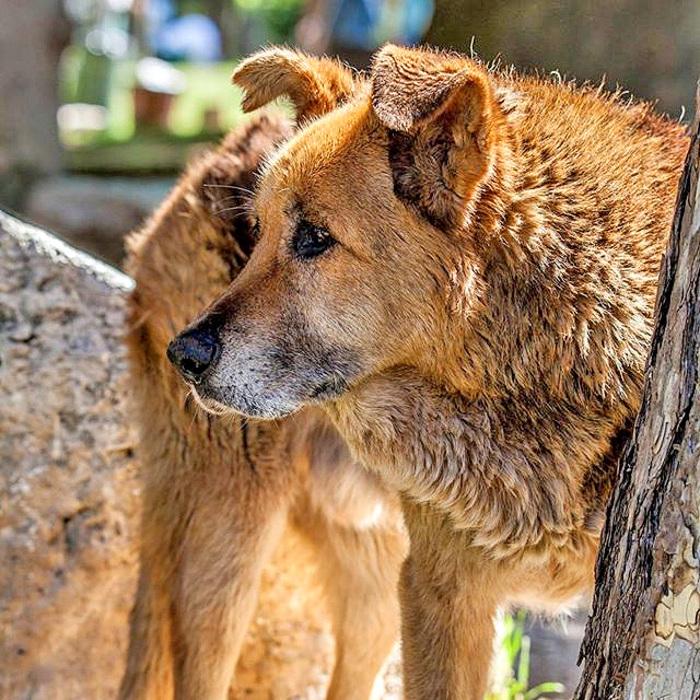 Terremoto L'Aquila, morto Pluto: addio al cane simbolo