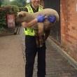 Pecore rubate, humour polizia: facce pixellate3