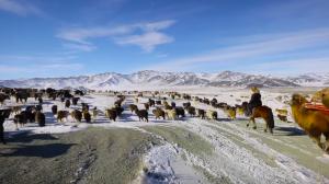 YOUTUBE Mongolia, vita da nomadi: la migrazione nella neve