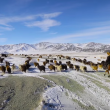 YOUTUBE Mongolia, vita da nomadi: la migrazione nella neve 11