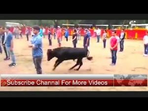 YOUTUBE Toro corre intorno alle persone ferme: che succede?7