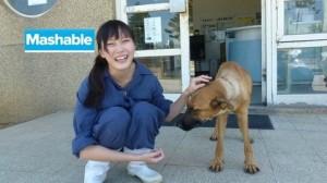 Veterinaria sopprime cani. La insultano e si toglie la vita