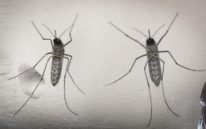 Zika, scienziati chiedono rinvio Olimpiadi Rio de Janeiro