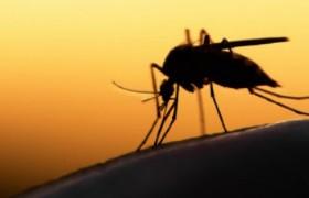 ZanzaMapp, l'app che ti aiuta a localizzare le zanzare
