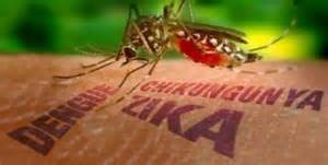 La zanzara di Zika, Dengue e Chikungunya