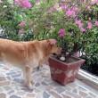 Salvatore Girone, abbraccio commosso al suo cane Argo 02