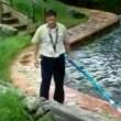 Alligatore fuori acqua4