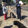 Cammina in strada trascinando il suo cane morto5