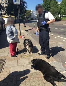 Cammina in strada trascinando il suo cane morto6