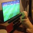 Cane guarda la partita alla tv...attaccato allo schermo3