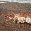 Carcassa mostro Loch Ness a bordo lago3