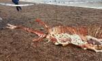 """""""Carcassa mostro Loch Ness a bordo lago"""" FOTO: poi scoprono la verità"""