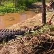 Cavalca coccodrilli davanti ai turisti 4