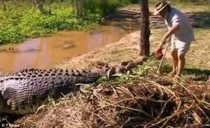 Guarda la versione ingrandita di YOUTUBE-FOTO Cavalca coccodrilli davanti ai turisti a 65 anni