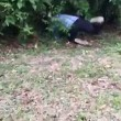 Corre verso siepe e afferra serpente lungo 1,8 metri2
