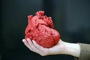 Un cuore in 3D ( Ansa)