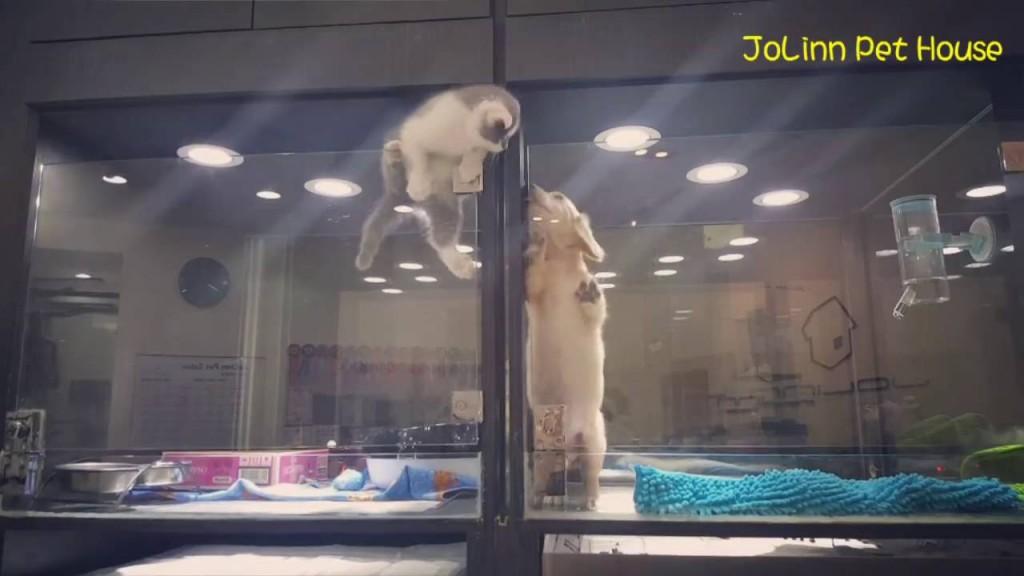 Gatto scavalca barriera per andare dall'amico cane