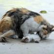 Mamma gatta prova a rianimare cuccioli morti 3