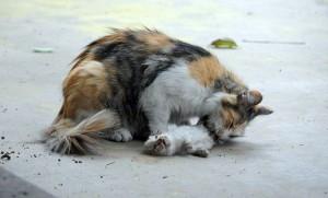 Mamma gatta prova a rianimare cuccioli morti 77