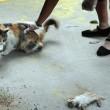 Mamma gatta prova a rianimare cuccioli morti 5