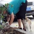 Mamma gatta prova a rianimare cuccioli morti