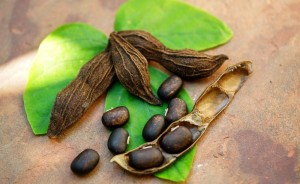 Mucuna Pruriens, legume come farmaco anti-Parkinson