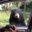 Orso apre porta auto, famiglia a bordo urla terrorizzata5