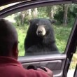 Orso apre porta auto, famiglia a bordo urla terrorizzata4