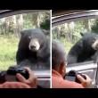 Orso apre porta auto, famiglia a bordo urla terrorizzata3