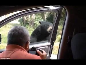 Orso apre porta auto, famiglia a bordo urla terrorizzata7