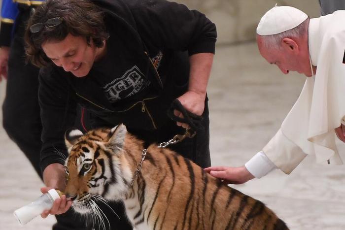 Papa Francesco accarezza una tigre dei circensi 3
