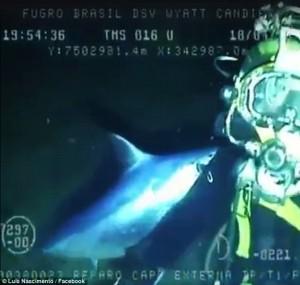 Pesce spada prova a trafiggere sub ma becca bombola ossigeno4