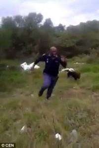 Guarda la versione ingrandita di YOUTUBE Poliziotto urla e scappa: ha appena visto un serpente