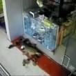 Scimmia ruba soldi dentro una gioielleria2