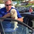 Spaccano vetro auto per liberare cane disidratato4
