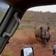 Rinoceronte nero non ama essere fotografato e punta l'auto 2