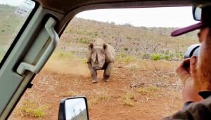Rinoceronte nero non ama essere fotografato e punta l'auto 7