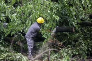 Mantova, donna muore schiacciata da un albero