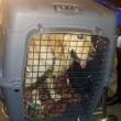 Argo, cane di Salvatore Girone, torna in Italia FOTO2