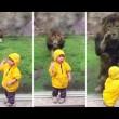 YOUTUBE Leone salta contro bimbo allo zoo ma...6