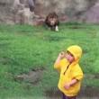 YOUTUBE Leone salta contro bimbo allo zoo ma...3