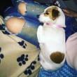 Nina Moric e lo scherzo a Belen Rodriguez sul cane scomparso 4