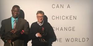Bill Gates combatte la povertà in Africa con...100mila polli