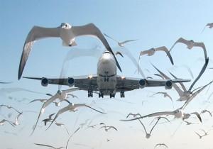 Volo Alitalia colpisce stormo gabbiani in fase decollo: nessun ferito