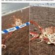 Carcassa mostro Loch Ness a bordo lago